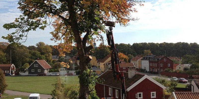 Arborist Stockholm